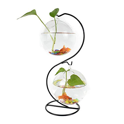 Glass Vase Plant Terrarium Hanging Planter