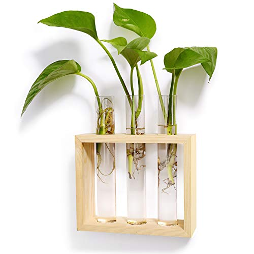 Wall Hanging Test Tube Planter
