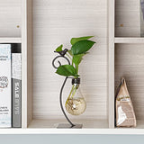 Desktop Glass Light Bulb Planter Vase
