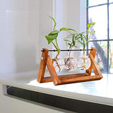 Decorative Hydroponic Tabletop Glass Planter with Wood Stand