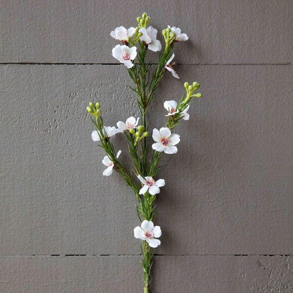 Waxflower Stem - Terra Cottage