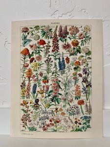 Vintage Botanical French Garden Flower Diagram Print