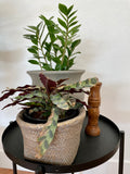 Cement Basket Planter