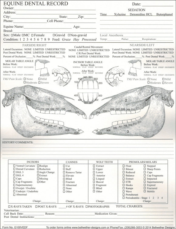 Veterinary Equine Dental Chart