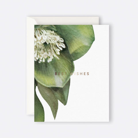 Father Rabbit Stationery | HELLEBORE BEST WISHES