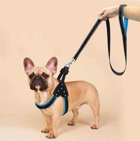 Frenchie Nylon Harness with Rhinestones & Lead - Custom Frenchie Store