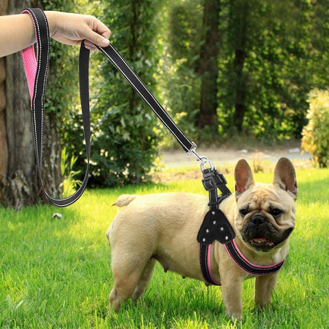 Frenchie Nylon Harness with Rhinestones & Lead Harness Custom Frenchie Store