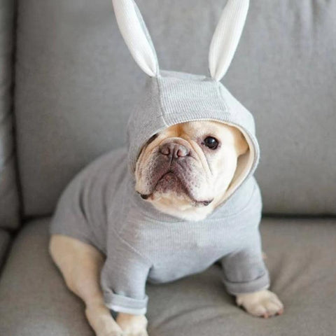 Bunny Costume - Custom Frenchie Store