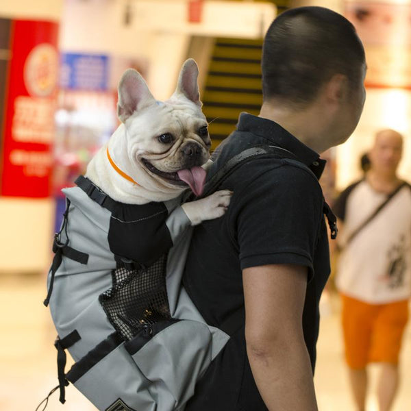 Adjustable French Bulldog Travel Carrier