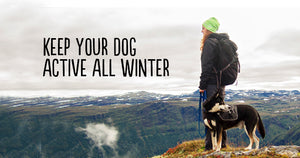 Keep your Dog Active all Winter