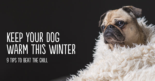 How to Keep your Dog Warm this Winter