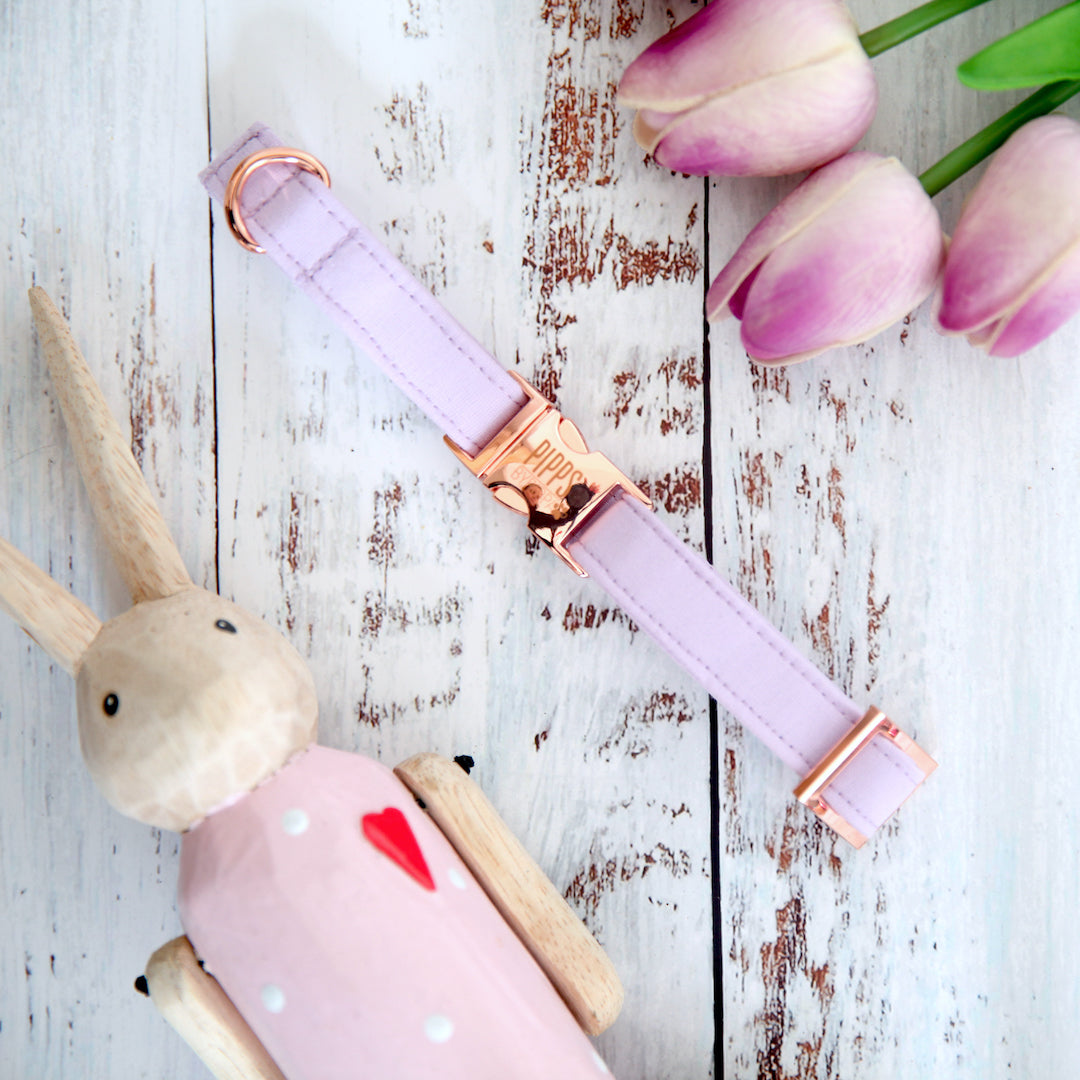 Lavender Dog Collar - Pipps by Pippa