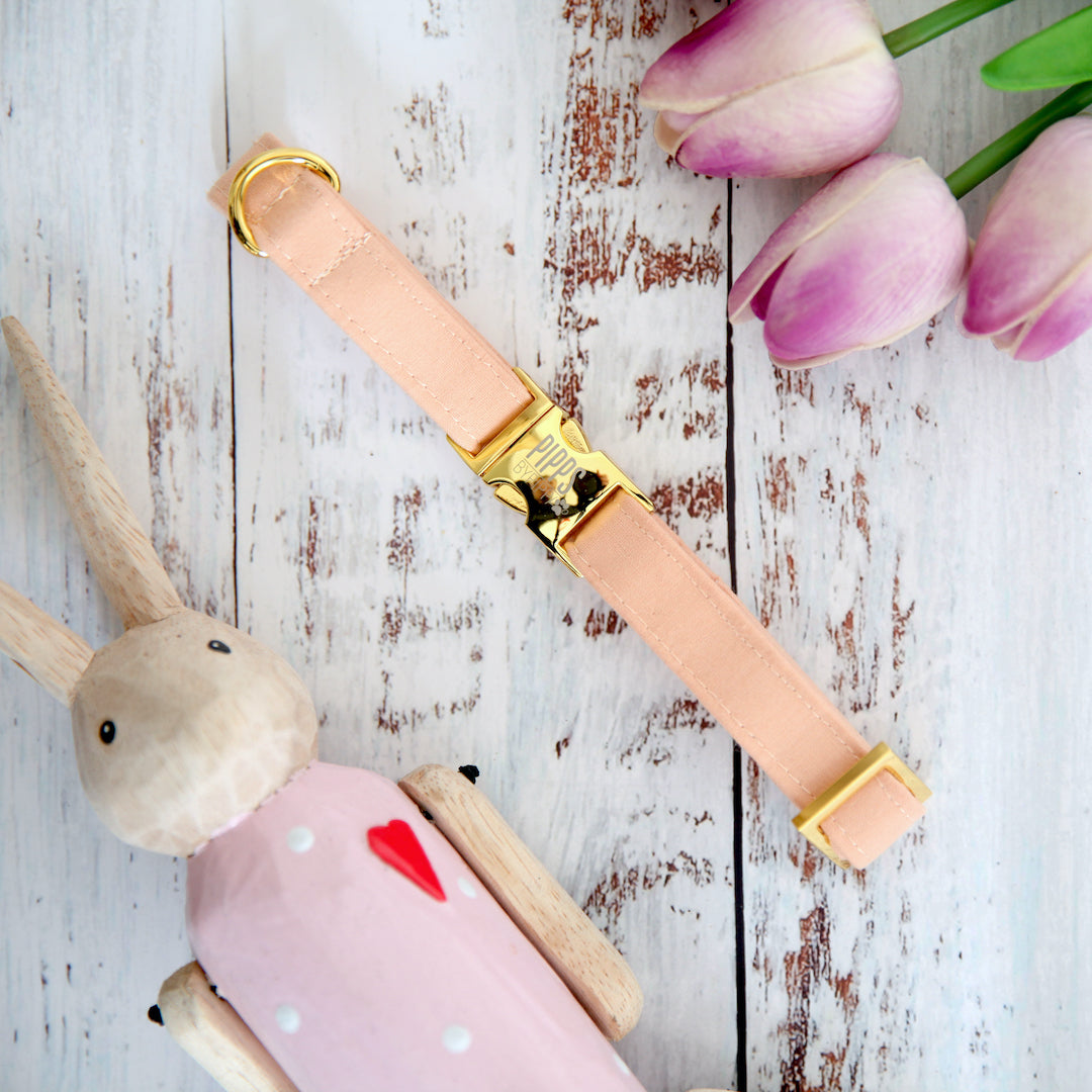 Peachy Dog Collar - Pipps by Pippa