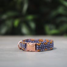 African Sky Dog Collar - Pipps by Pippa