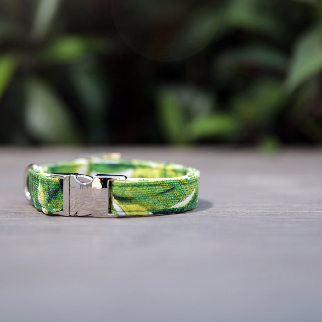 Palms Dog Collar - Pipps by Pippa