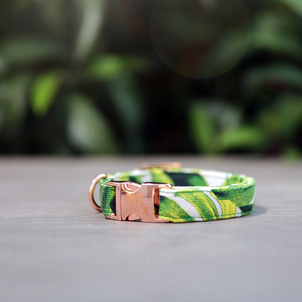 The Palms Dog Collar - Pipps by Pippa