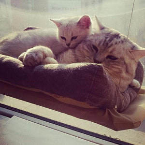 Sunshine™ Cat Hammock