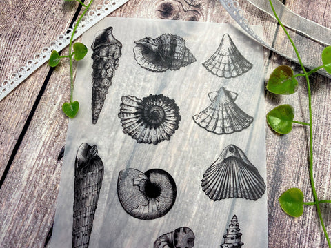 Vellum Paper Vintage Seashell, Sealive, Antique, Shell, Under the Sea, Retro, Design Elements V277