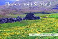 Flowers from Shetland