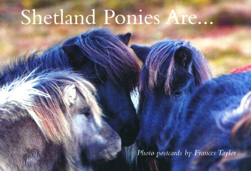 Shetland Ponies Are…