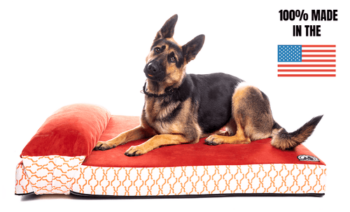 Heavy Duty Solid Memory Foam Dog Bed W/Pillow (BACK ORDER)