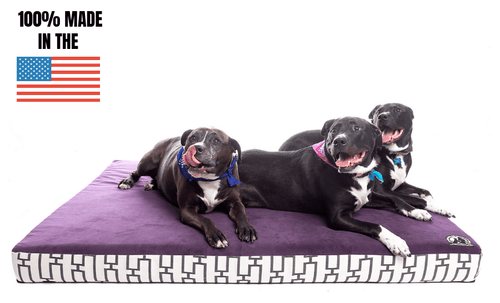 Heavy Duty Solid Memory Foam Dog Bed (BACK ORDER)
