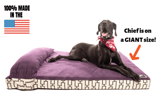 Heavy Duty Solid Memory Foam Dog Bed W/Pillow
