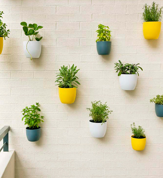 Potted wall plants