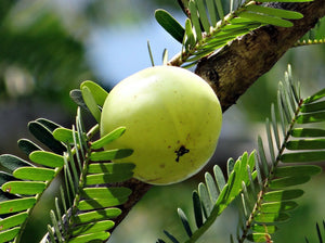 What Is Amla Powder Good For?