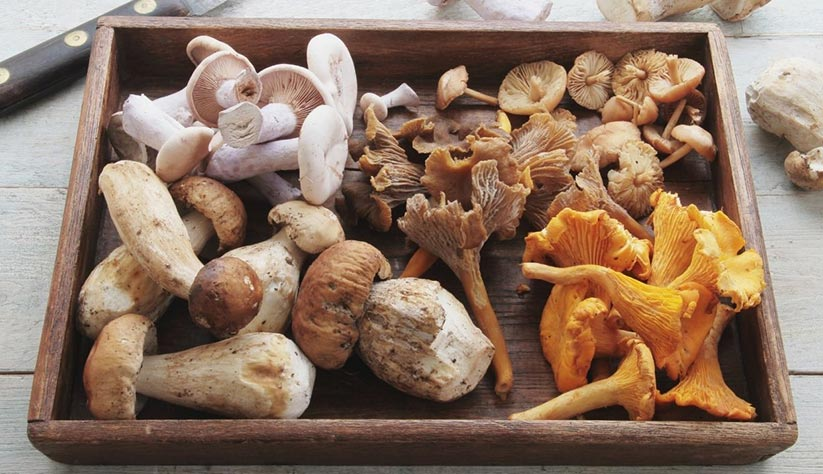 Wide variety of mushrooms as sources of vitamin D