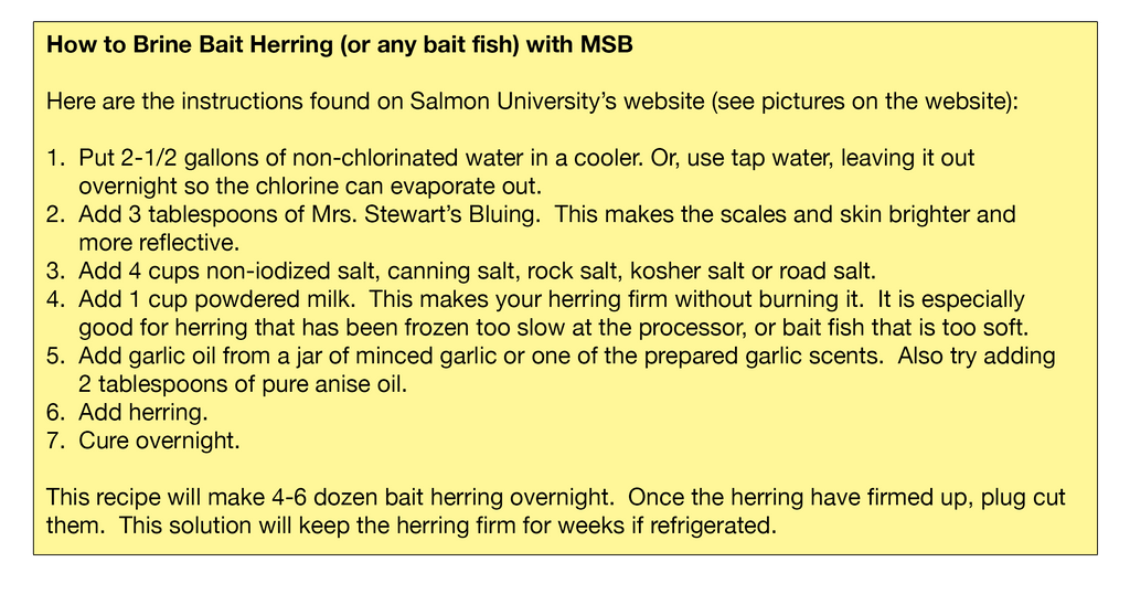 Brining Bait Fish with MSB Yellow Box