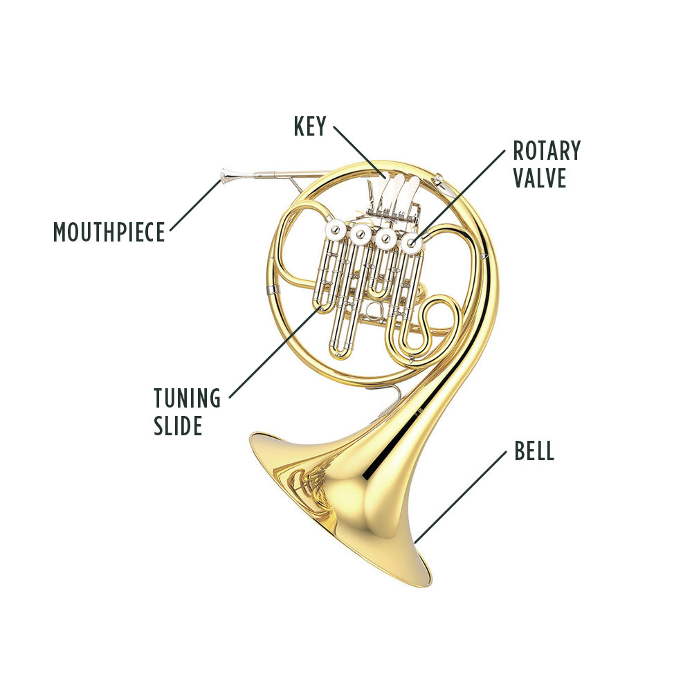 French Horn Anatomy