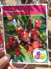 Cherry Romeo #05 TF