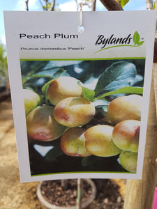 Peach Plum #05 Fibre