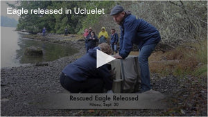 Eagle Release Video