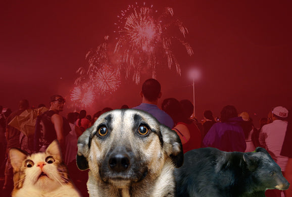 Fireworks: A Clear and Present Danger to Animals