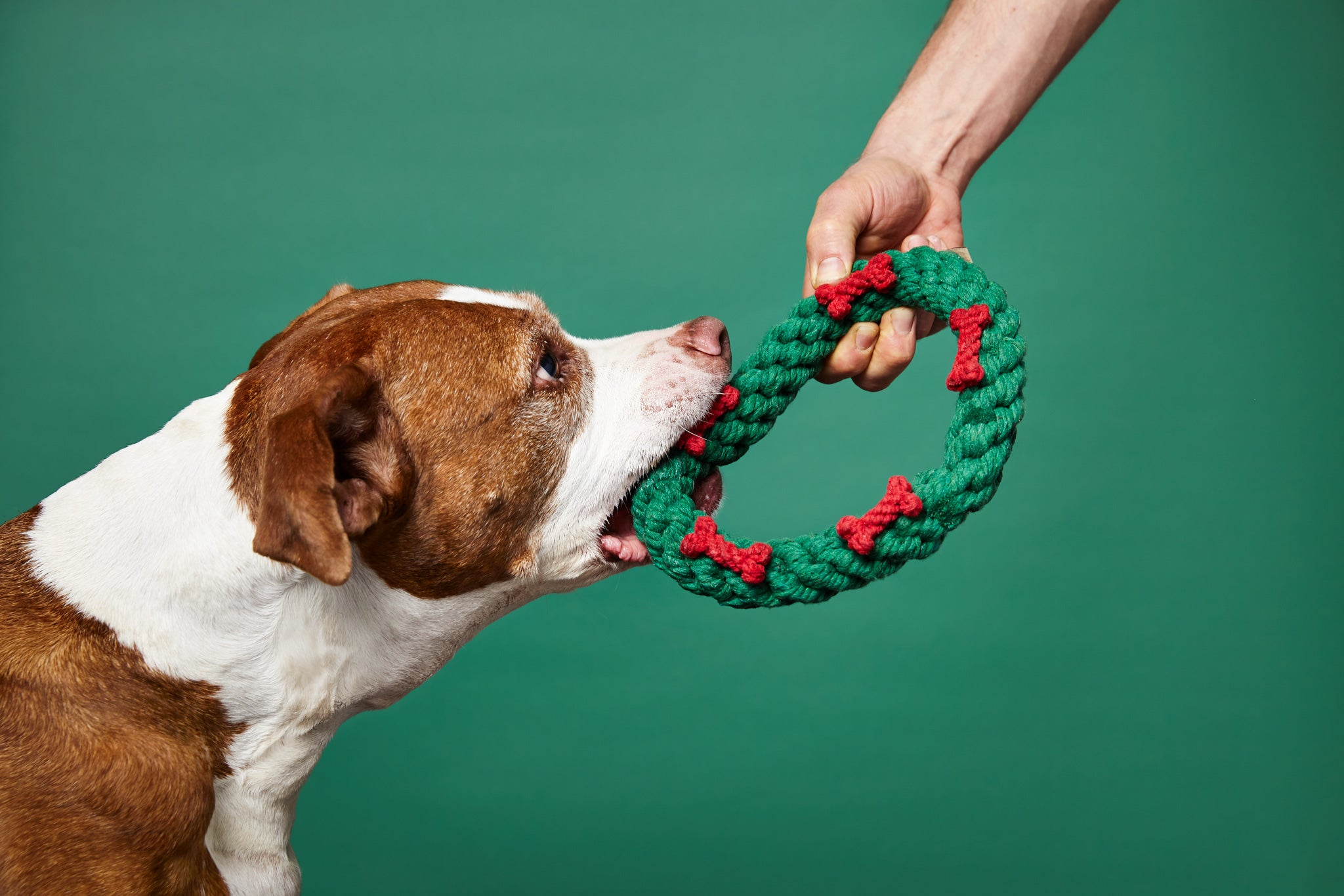 Holiday Hoopla and Doggy Health Hazards