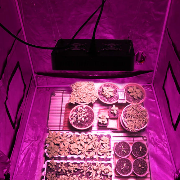 grow tents - complete grow tent kits : complete led grow tent - memphite.com