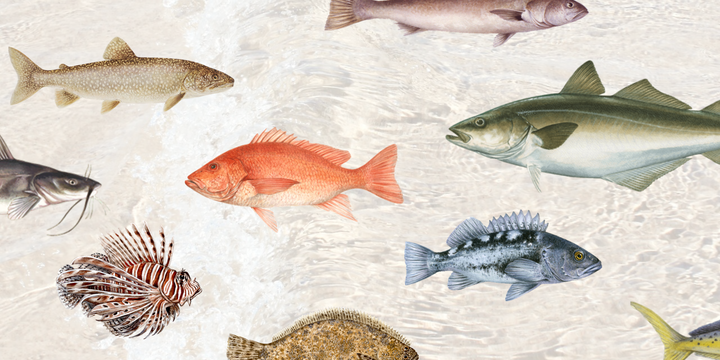 A Sustainable Fish Guide - How to Choose What Seafood To Eat