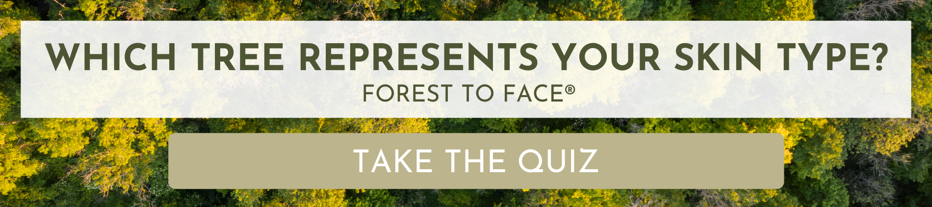 skincare from trees