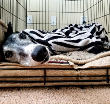 Have an older dog? Read this.