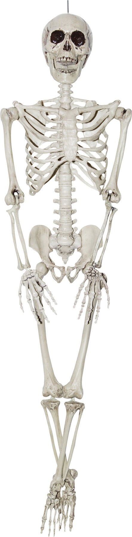 MORRIS COSTUMES Skeleton 36 Inch