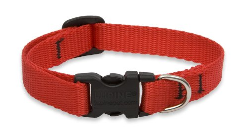 "LupinePet Basics 1/2"" Red 8-12"" Adjustable Collar for Small Dogs"