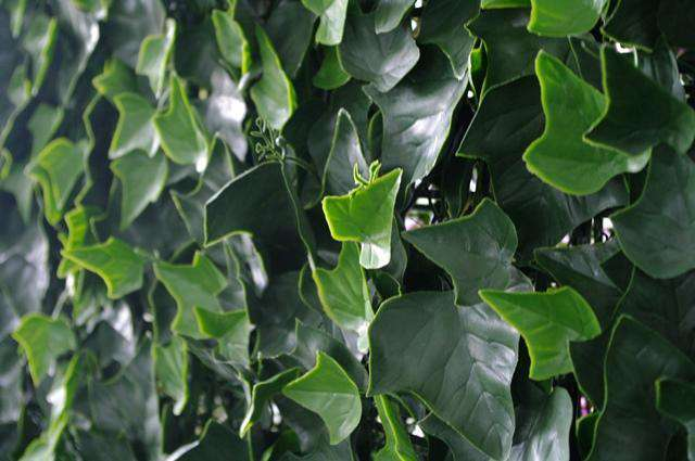Ivy Leaf Screens / Panels UV Stabilised 1m X 1m - Desirable Home Living