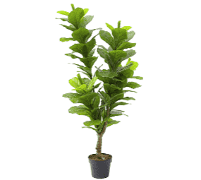 Artificial Fiddle Fig 130cm