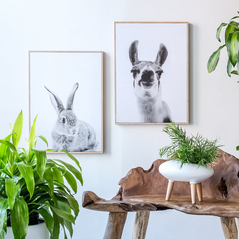 Canvas Wall Decor - Rabbit