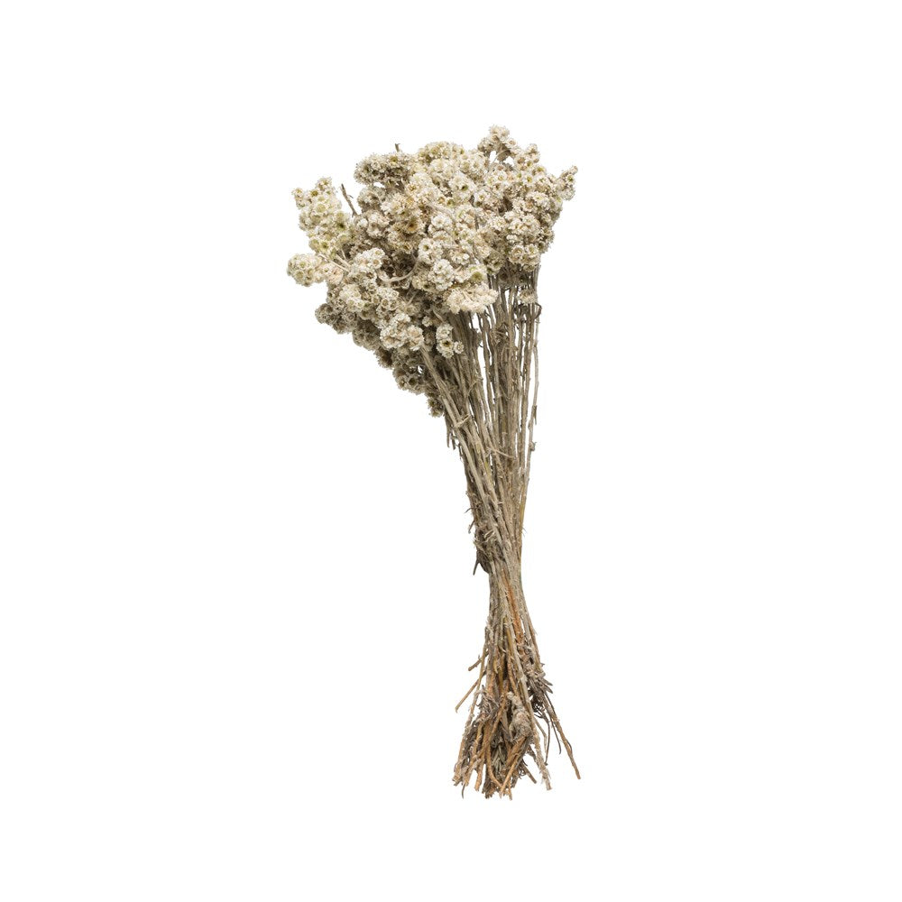 Dried Natural Edelweiss Bunch