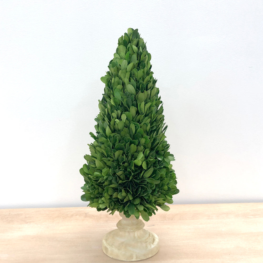 Preserved Boxwood Tree