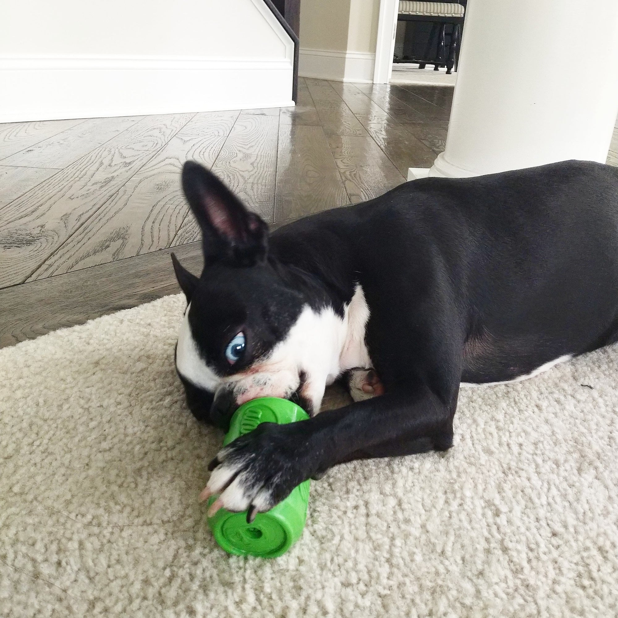 Make a Good Dog with Chew Toys