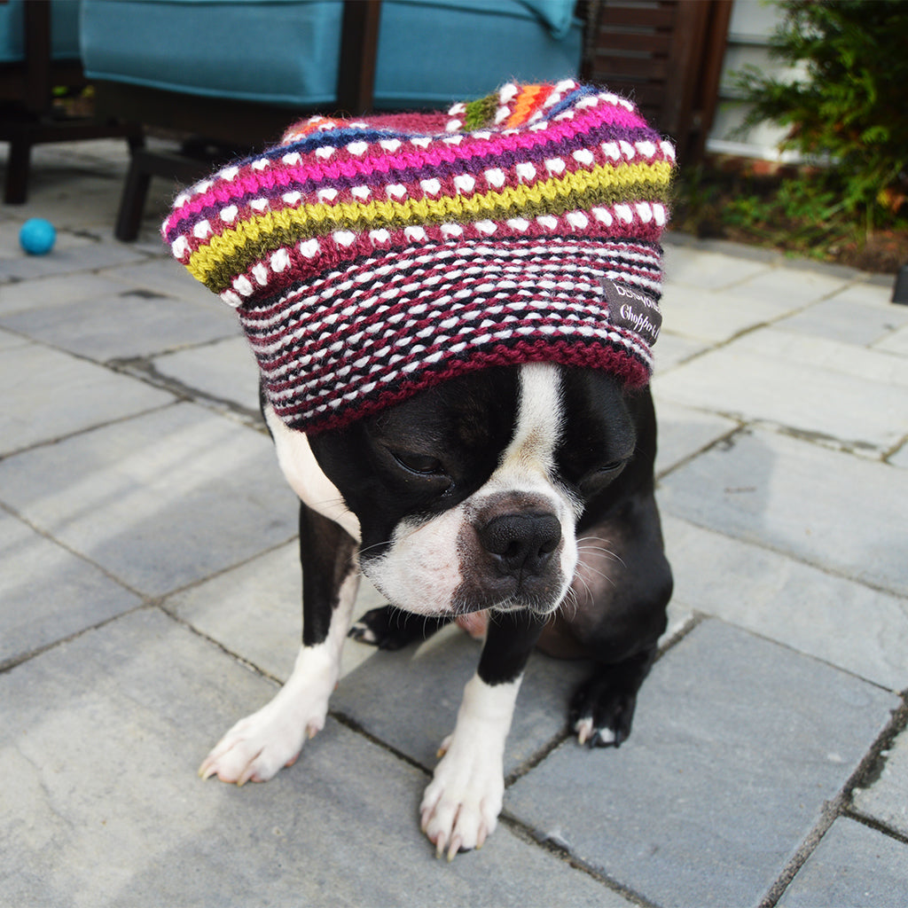 beyondBeanie: Fall Fashion for Our Two-Legged Friends